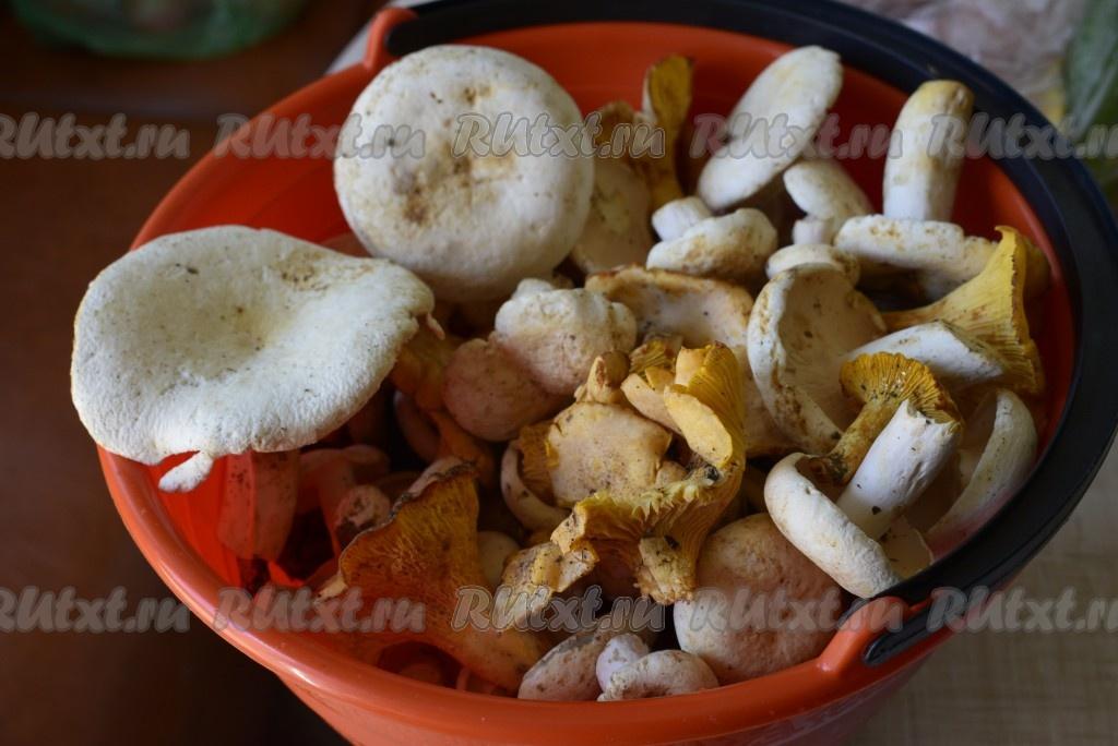 Соленые грибы горячим способом рецепт