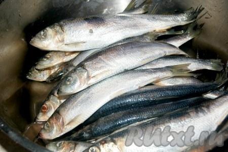 Приготовить свежую салаку если рыбка замороженная, то её предварительно надо разморозить).