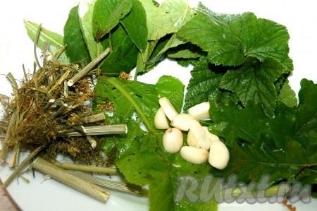 Подготовить листья - черной смородины, вишни, дуба, хрена и несколько зубчиков чеснока, а также зонтики укропа со стеблями.