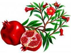 Гранат, дерево, цветки, плоды