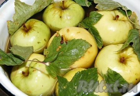 Для того, чтобы моченые яблоки получились вкусными, надо чтобы заливка покрывала их полностью.